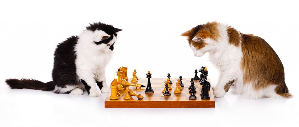 Growth Strategy Cats